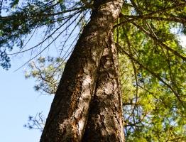 Spring at Skalitude - the Vortex Tree.